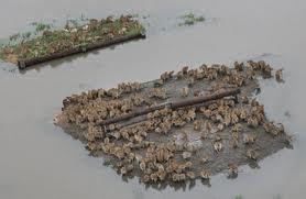flood animals banded together